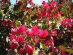 Flores (36)