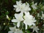 Flores (10)