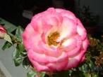Flores (24)